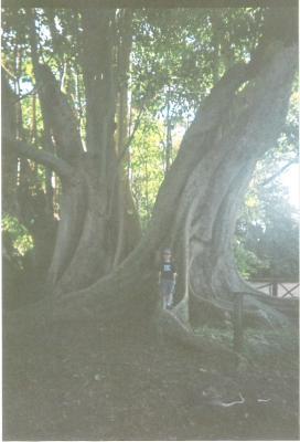 El árbol de las palabras